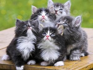 Ринотрахеит лечение кота
